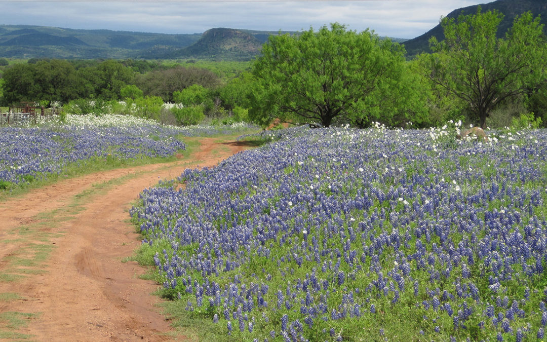 Plan the Perfect Hill Country Getaway