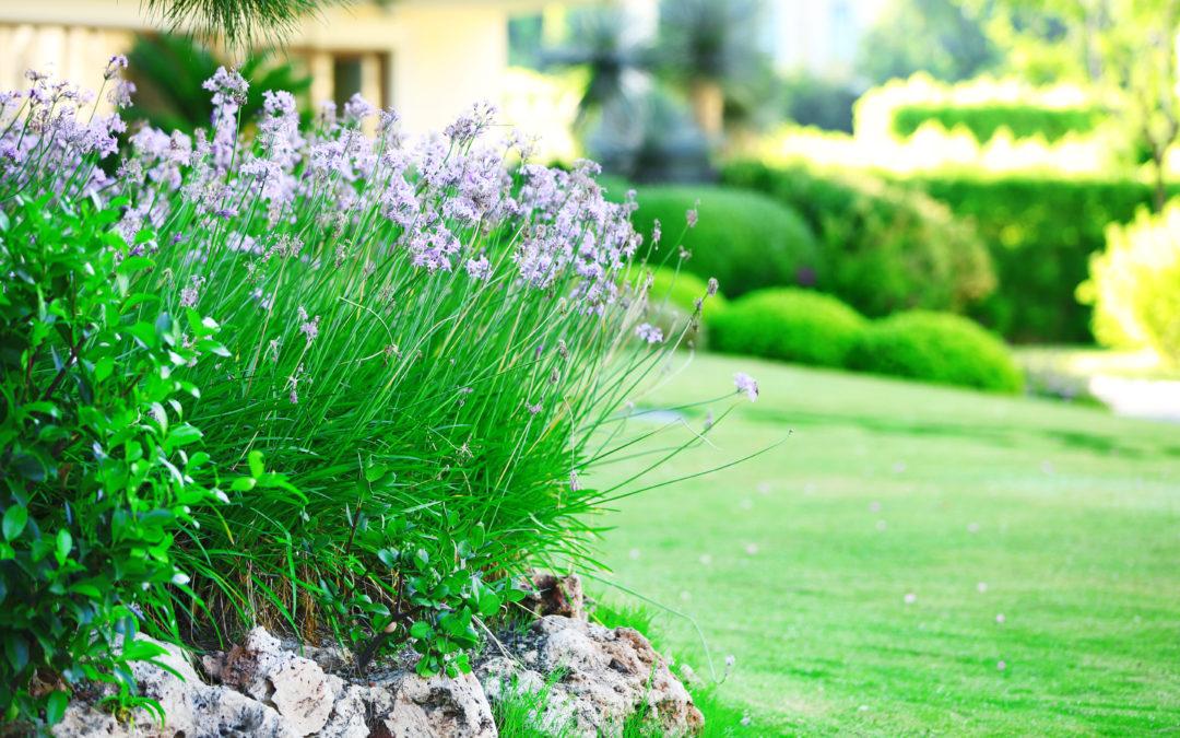 3 Organic Lawn Care Tricks for a Lush Yard